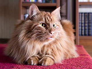 Pet Hair Removal | Carpet Cleaning Orange, CA